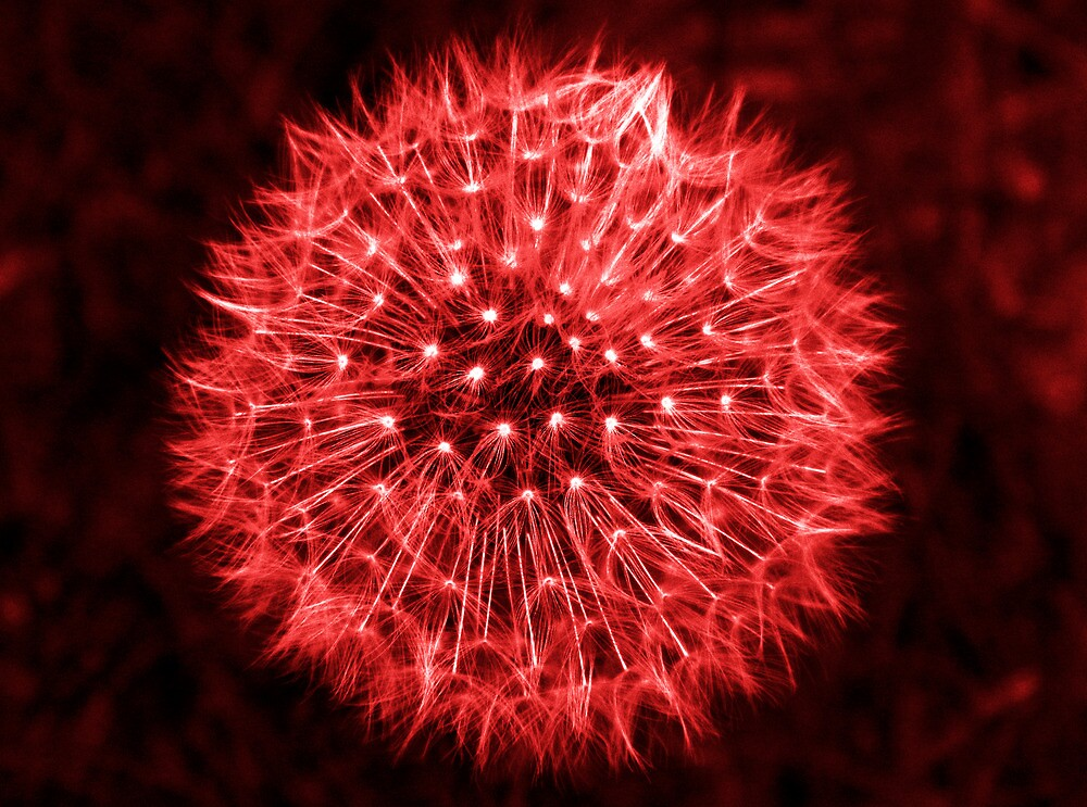 Dandelion Red by DavidWHughes