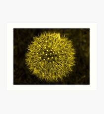 Dandelion Yellow Art Print