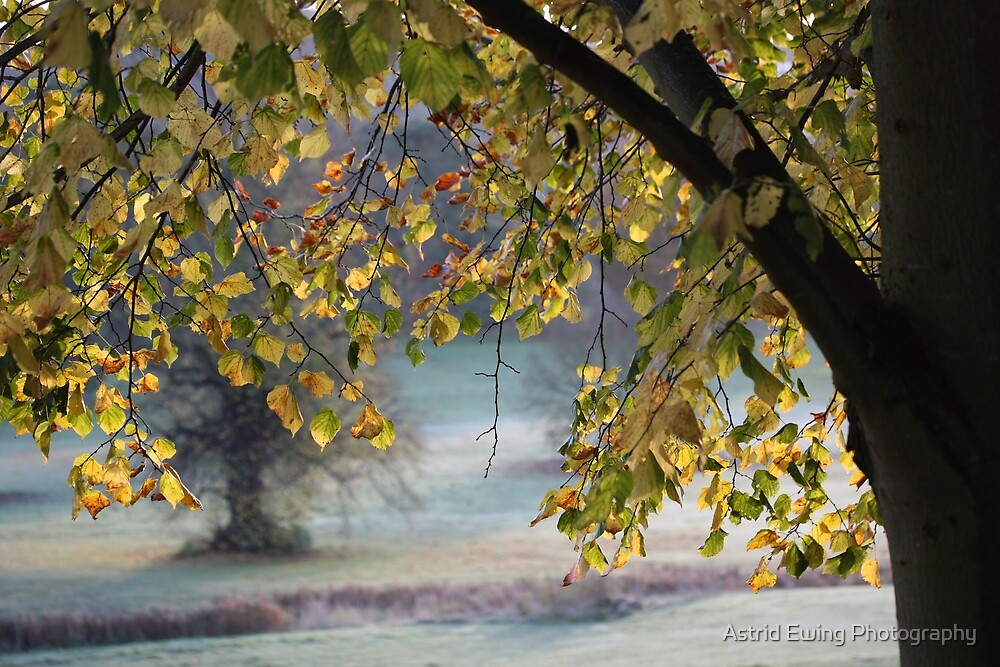 Autumn Arch by Astrid Ewing Photography
