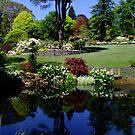 Windy Ridge Garden, Mt Wilson by Gabrielle  Lees