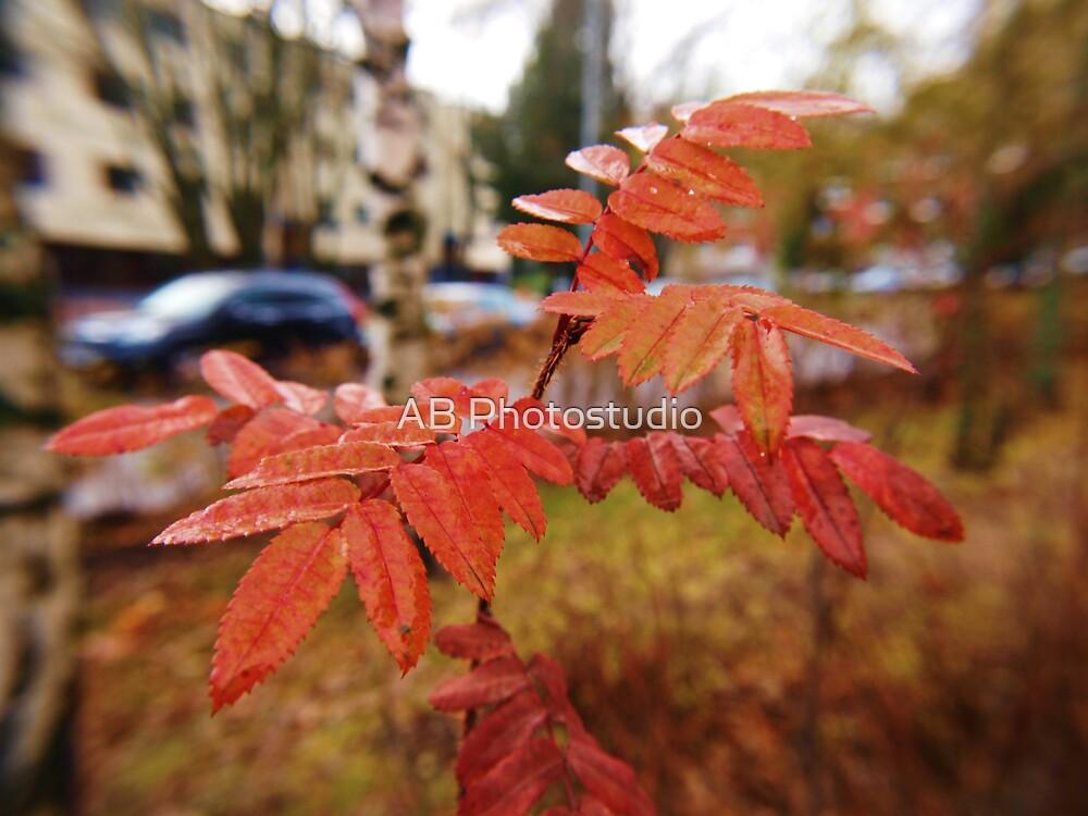 Rowan berry at autumn by Arve Bettum
