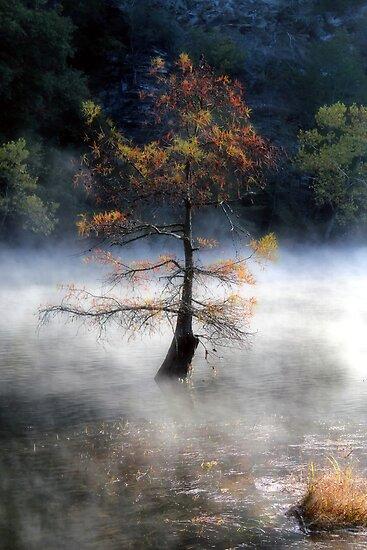 In The Autumn Mist by Carolyn  Fletcher