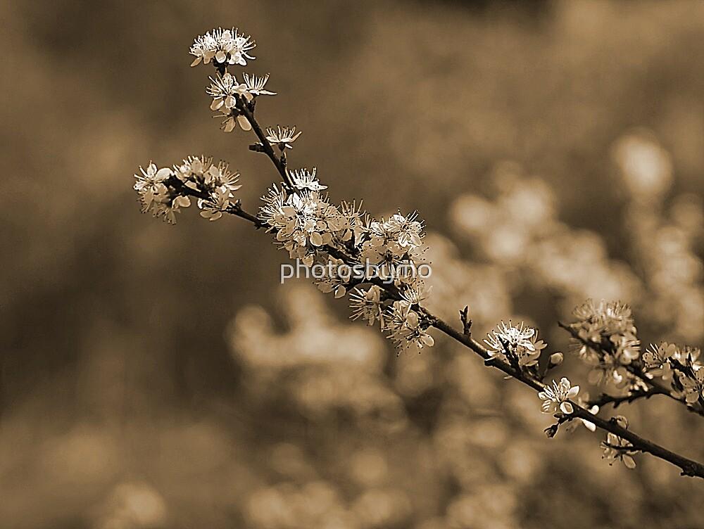 First Blossom by photosbymo