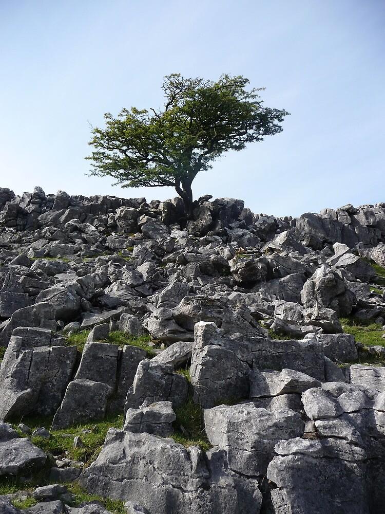 Limestone Pavement Lone Tree by Paul Swift
