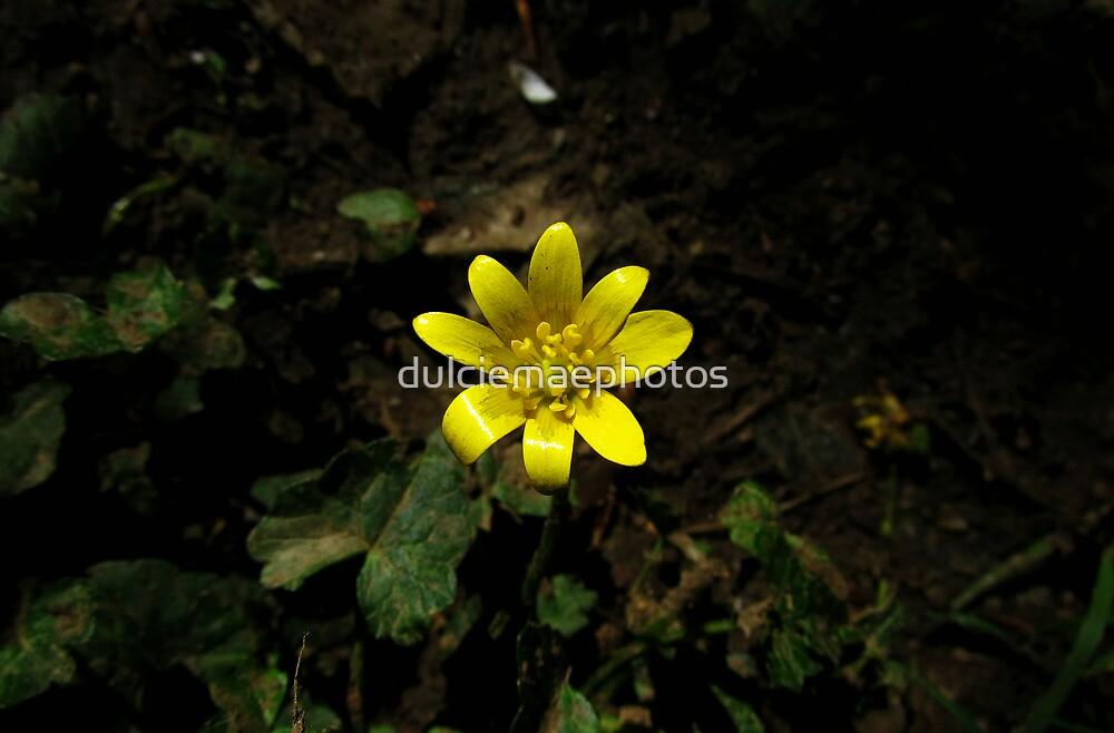 Shine in darkness by dulciemaephotos