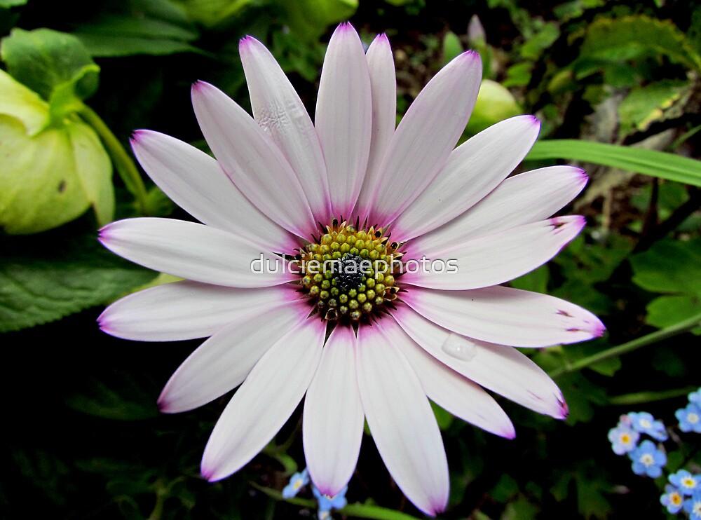 Petals by dulciemaephotos