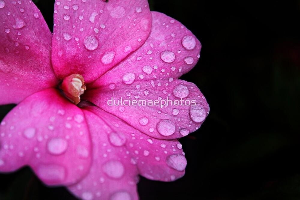 Dew drops by dulciemaephotos