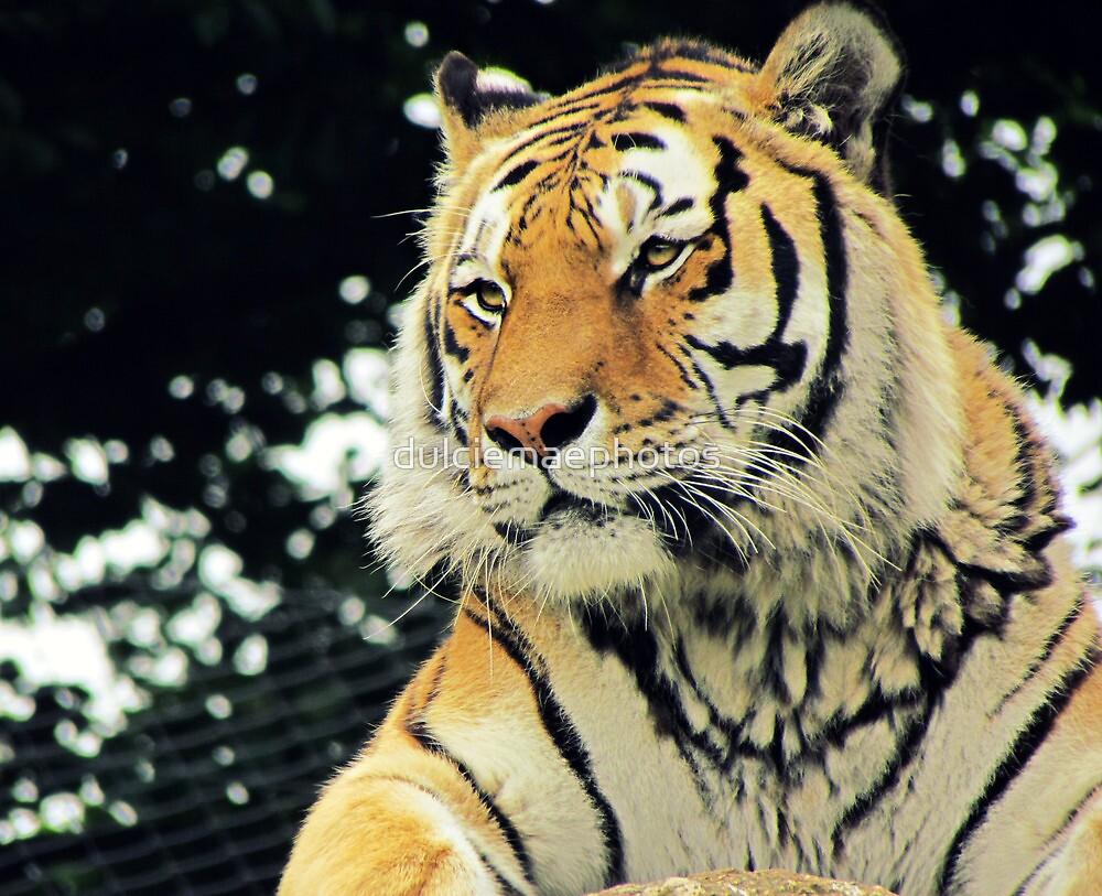 Amul Tiger by dulciemaephotos