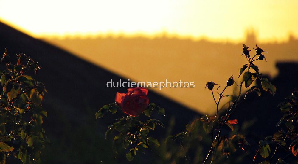 Rose in sunset by dulciemaephotos