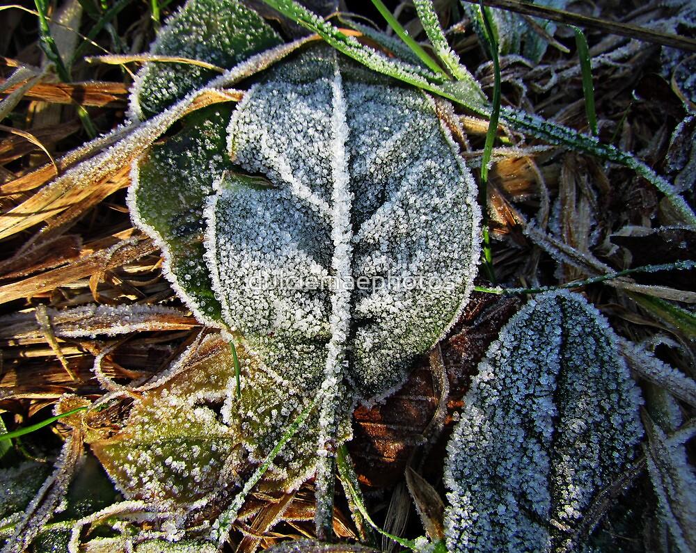 Icy leaf by dulciemaephotos