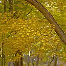 Cranberry Woods 5 by Paul Kavsak