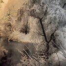 Christmas in Middelheim Park by Gilberte