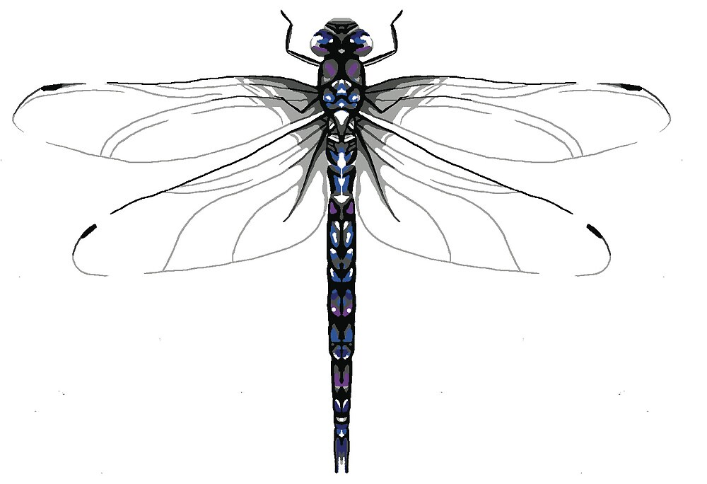 Hawker dragonfly by sciencefluff