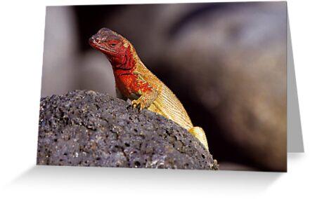 Lava Lizard by Sylwester Zacheja