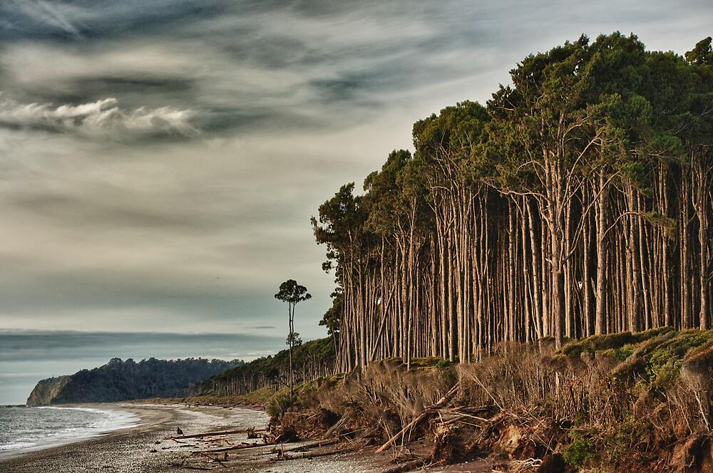 Bruce Bay, Westland National Park by meredithnz