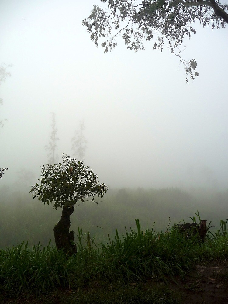 Misty Trees | Mweso, DRC by rubbish-art