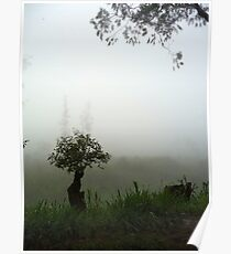 Misty Trees   Mweso, DRC Poster