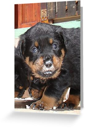 Messy Rottweiler Puppy With Food Covering Nose by taiche