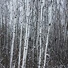 What does quiet look like?   Robert Charles by RobertCharles
