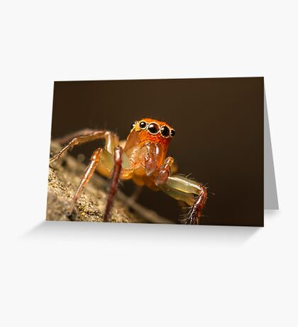 (Prostheclina pallida) Male Jumping Spider Greeting Card