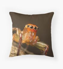 (Prostheclina pallida) Male Jumping Spider Throw Pillow