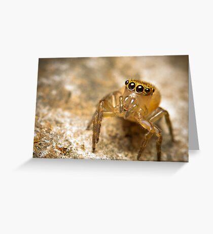 (Prostheclina pallida) female Jumping Spider Greeting Card