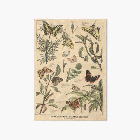 vintage butterfly print Art Board Print