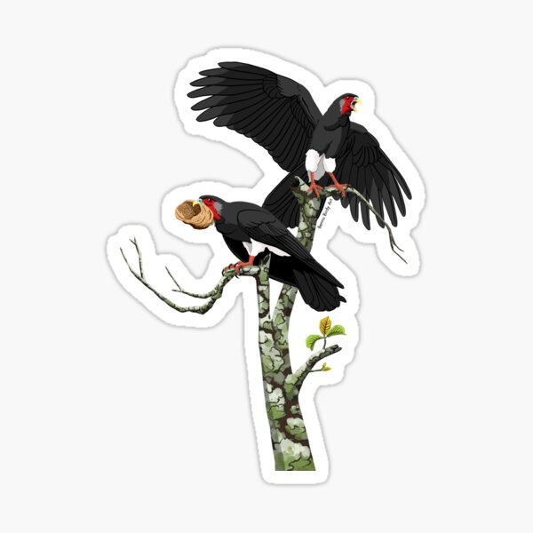 Red-Throated Caracara Sticker