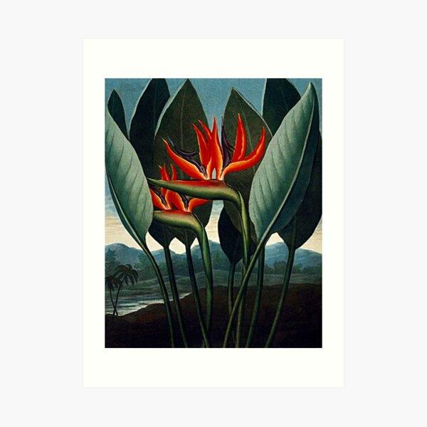 Bird of Paradise Flowers Watercolor Painting Art Print-Floral-Home Decor-Wall Art-Botanical Print