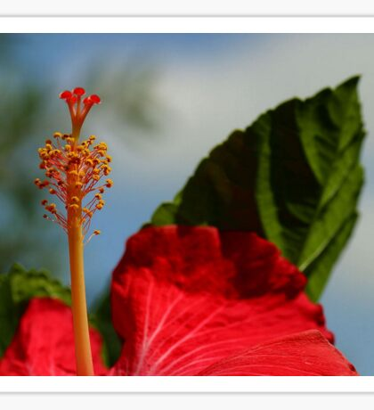 Close Up of Red Hibiscus Stamen and Pollen Sticker