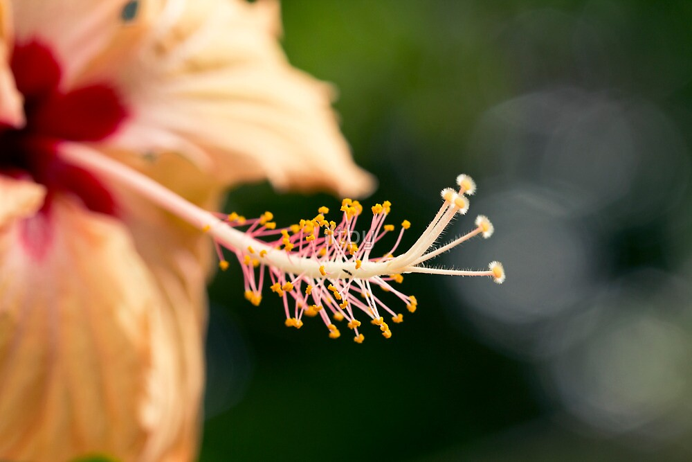 Tropical II by iltby