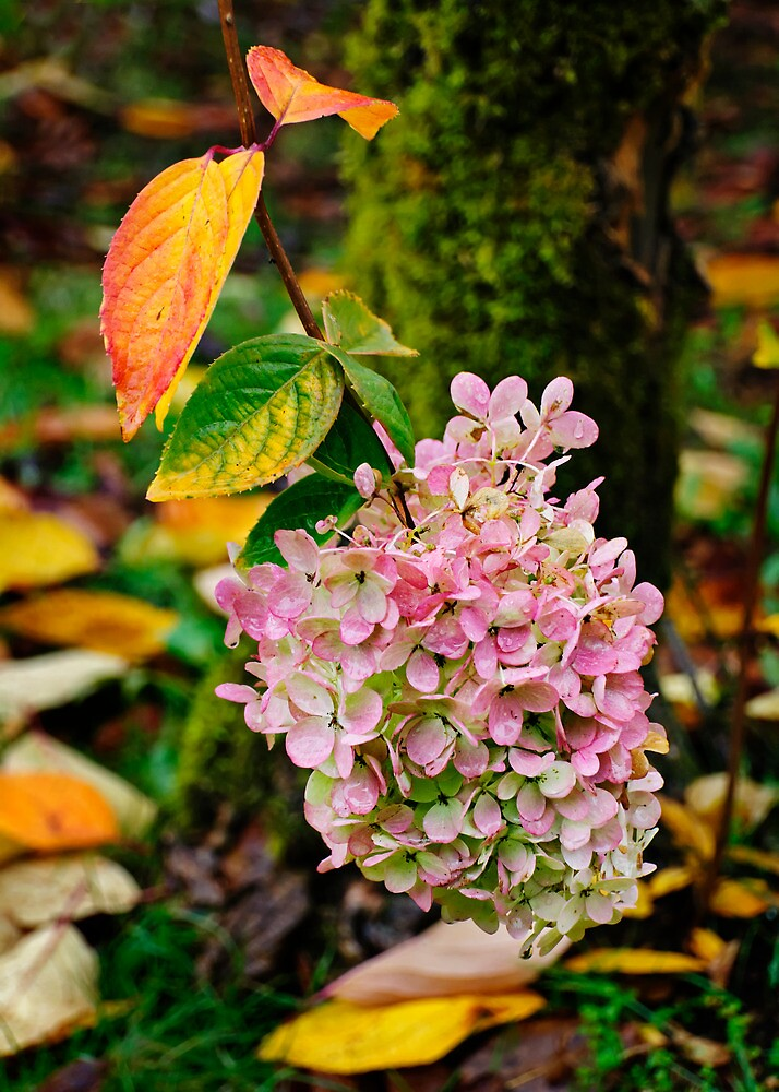 Pink is the New Fall Color by Lynnette Peizer
