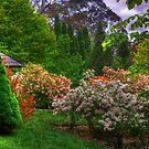 Bisley Gardens IV - Mt Wilson NSW Australia - Panaroma  by Brad Woodman