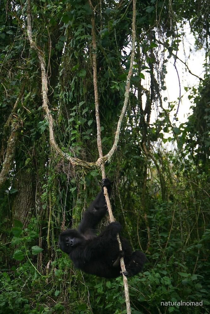 Hanging Around by naturalnomad