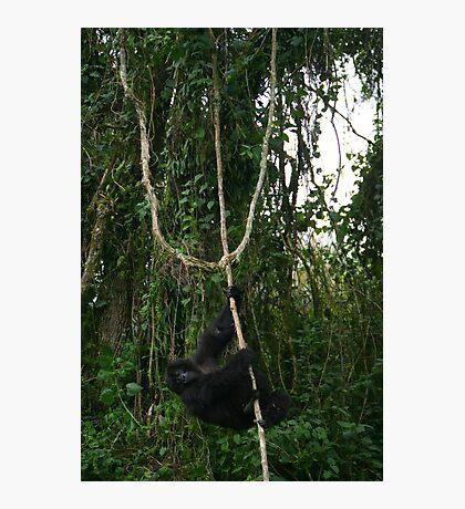 Hanging Around Photographic Print