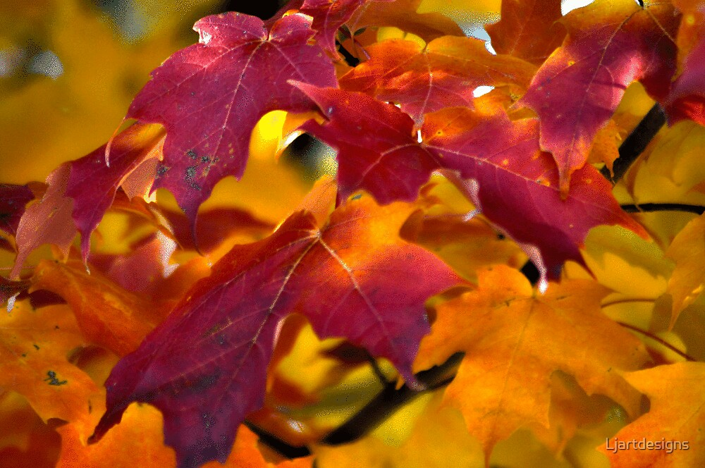 Autumn Leaves by Ljartdesigns