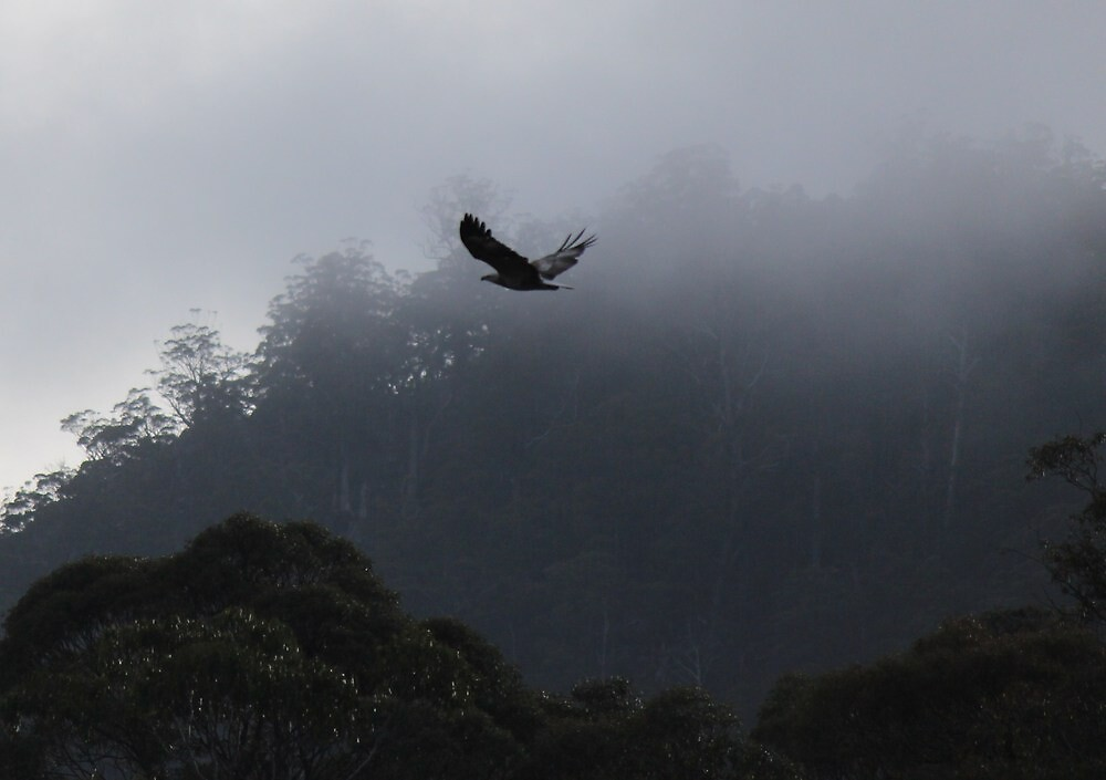 eagle by gaylene