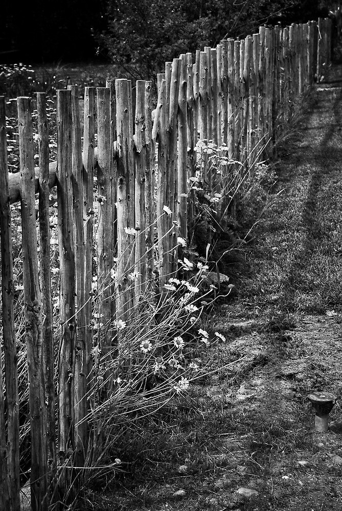 Fence The Flowers  by JerryCordeiro