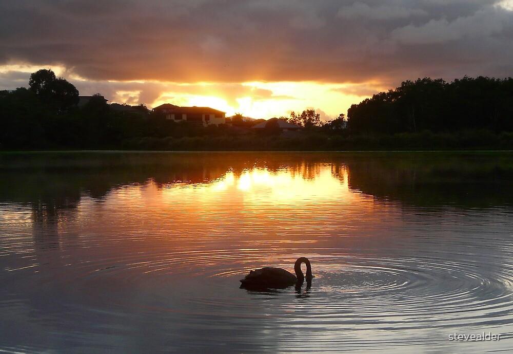 Swanning Around At Sunrise by stevealder