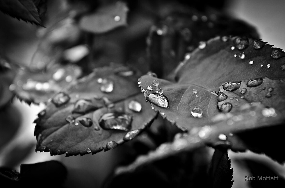 Rose Leaves  by Rob Moffatt