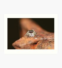 Little jumping spider Art Print