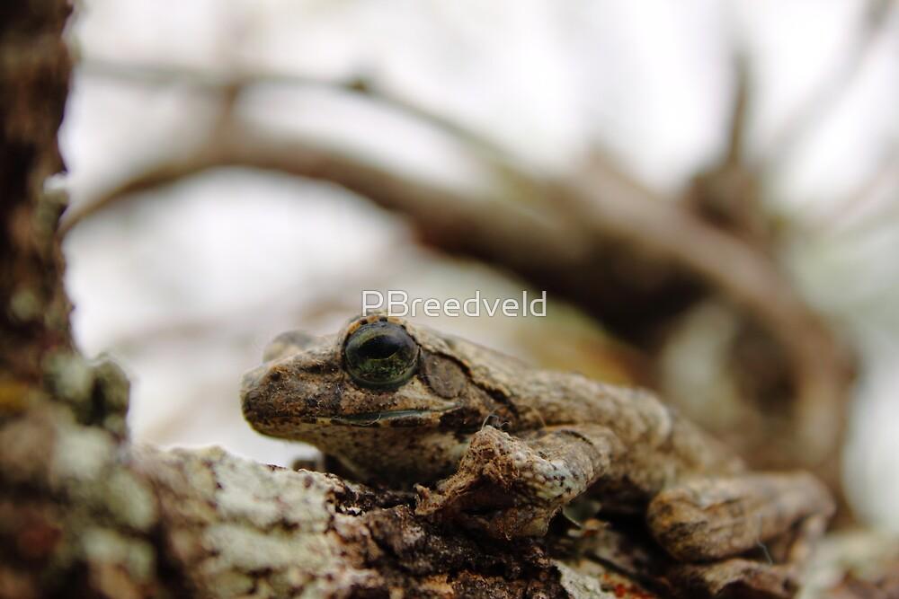 Foam Nest Frog by PBreedveld