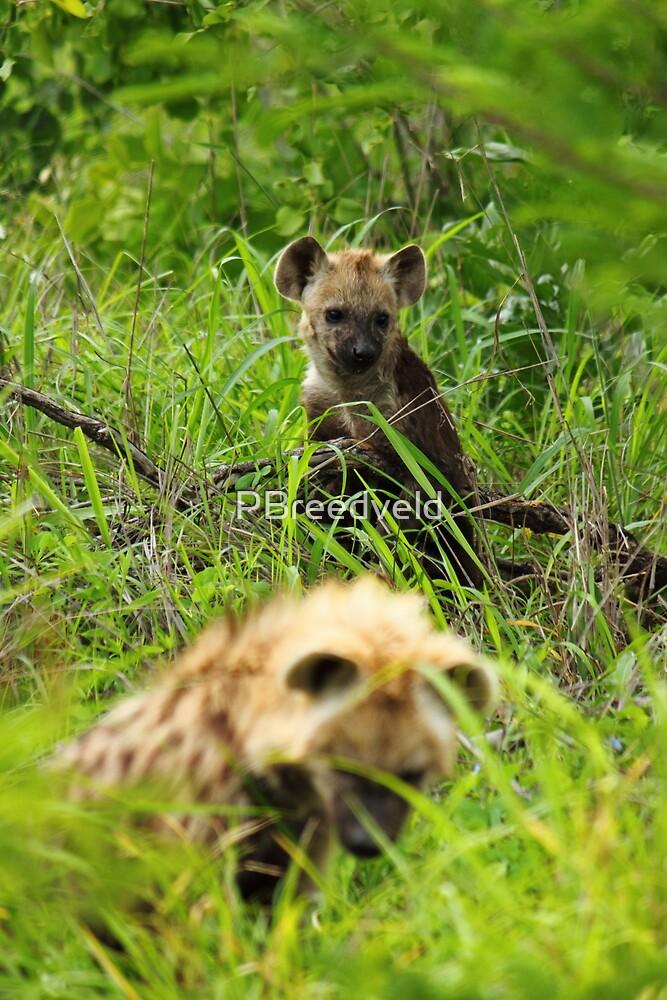 Hyena pups 1 by PBreedveld
