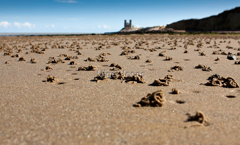 Wormcasts on the Beach  by Nigel Jones
