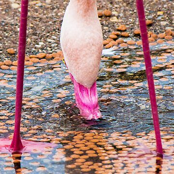 Flamingo by seanlb1