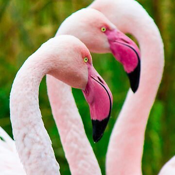 Pink Flamingos by seanlb1