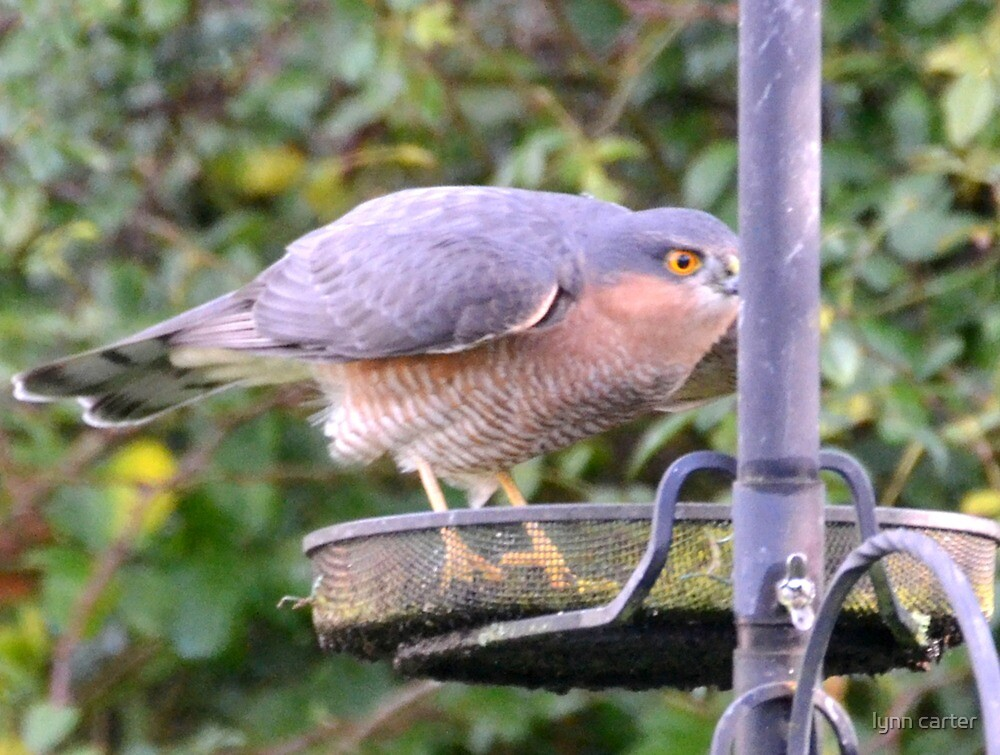 Large Bird In The Garden by lynn carter