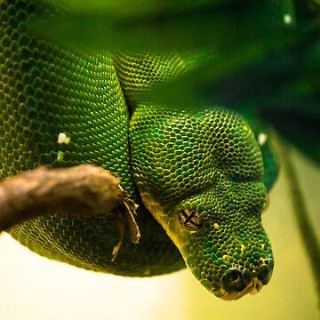 Snake Eyes by seanlb1