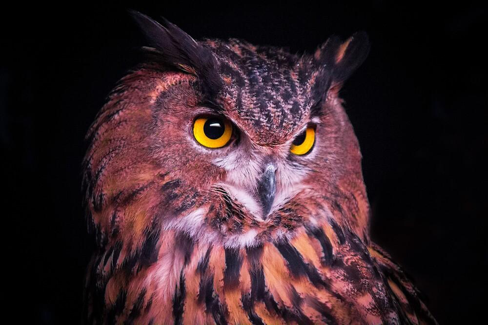 Eurasian Eagle Owl by Sean Balanger