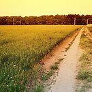 Path by Eddie Nock